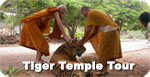 Tiger Temple Tour
